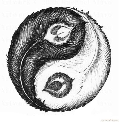 Feather Ying Yang Symbol Tattoo Drawing ❥❥❥ http://bestpickr.com/yin-yang-tattoos