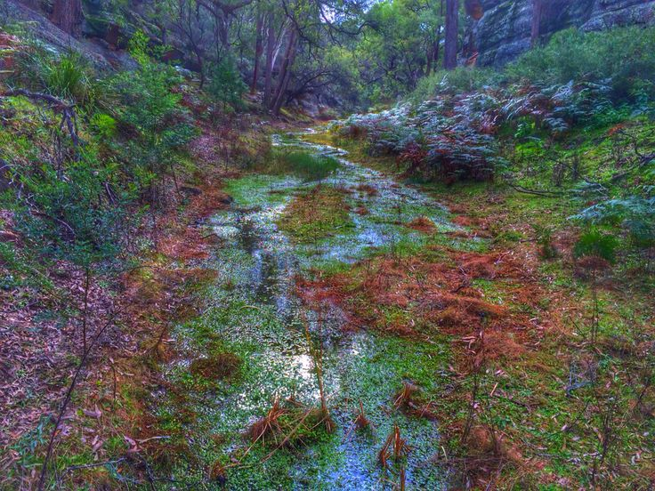 The Drip Gorge