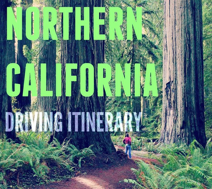 Highlights of this road trip include Glass Beach, Victorian Ferndale and the Avenue of the Giants. Take in breathtaking coastal vista's, relax in quaint seaside towns, and hike in impressive coastal Redwood forests. - See more at: http://www.road-trip-usa.com/blog/northern-california-coast-driving-itinerary#sthash.QydNslMT.dpuf