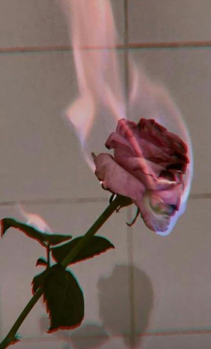 Pin By Micaela Reinaldi On Fondos Wallpaper Tumblr Lockscreen Aesthetic Roses Best Flower Wallpaper
