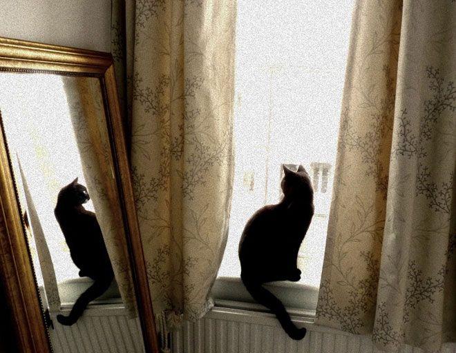 Incredible photoBelly Dance Costumes, Kitty Cat, Black Kitty, Mirrors Image, Chat Noir, Black Cats, Beautiful, Blackcat, Animal