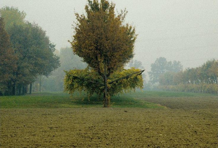 La piantata padana nella pianura emiliano-romagnola del 1500 | Seminario Veronelli | Associazione per la cultura del Vino e degli Alimenti