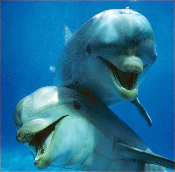 Libertad y mar sinónimo de #felicidad