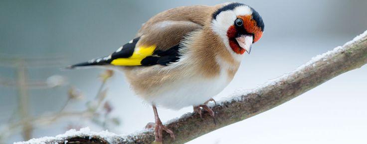 Vögel vor der Haustür: Schicken Sie uns Ihr bestes Vogel-Porträt am Futterhäuschen, im Garten oder auf dem Balkon - und gewinnen Sie mit etwas ...