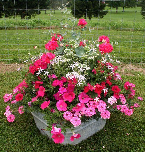 Container garden gardening go gardening pinterest - Container garten ...