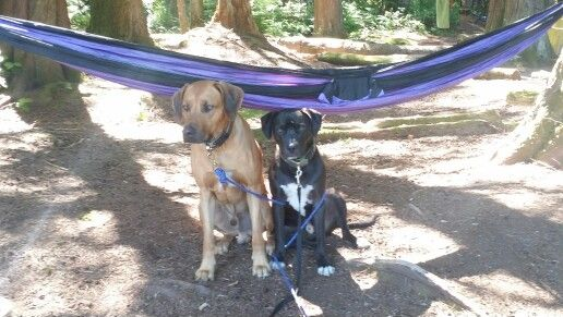 Yo Pops, we could use some help here. #camping #gratitude #dexter #max