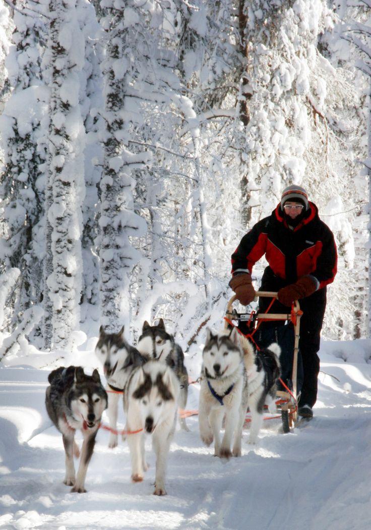 Huskysafari with Saija Lodge, Taivalkoski, Lapland, Finland www.saija.fi