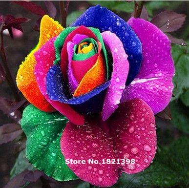 Il trasporto libero 100 PZ Beautiful Flower Arcobaleno rosa seme Rose Seeds bonsai piante da giardino