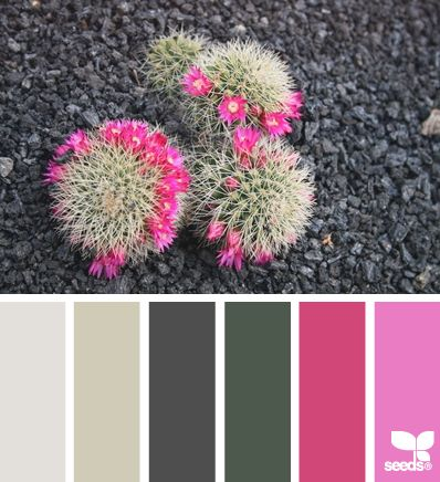 desert color via Design-Seeds | A high Love value would resonate with the rosy fuschia yet feel the safety of the grounded greens & easy neutrals.