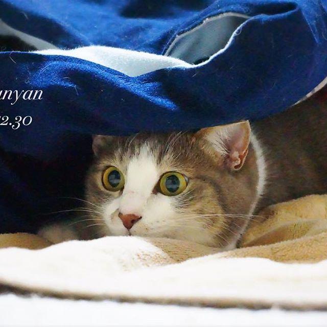 獲物を狙う咲ちゃん(*ΦωΦ)✨この瞳孔が真ん丸に開いた目と顔がたまらなく好きなのです!😹💕 #ファインダー越しの私の世界 #ミラーレス一眼 #カメラ女子 #写真好きな人と繋がりたい #写真撮ってる人と繋がりたい #猫好きさんと繋がりたい #猫 #ネコ部 #にゃんすたぐらむ #愛猫 #可愛い #咲ちゃん #咲 #狙う目 #まんまるおめめ #猫の目 #サバシロ #サバシロ猫 #トラ猫 #cat #cats #cute #cateyes #catsofinstagram #gato #sonya6000
