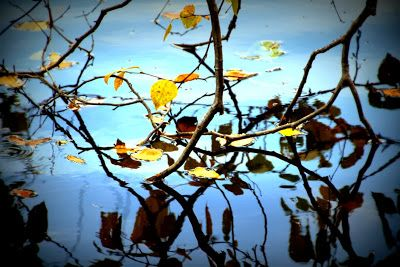 Heijastuksia veden pinnassa. Syksy 2013. / Reflection in the water. Autumn 2013.