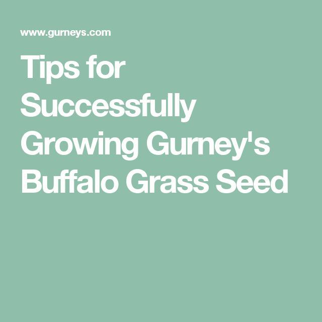 Tips for Successfully Growing Gurney's Buffalo Grass Seed