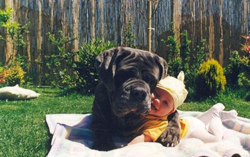 best friends.: Puppies, Best Friends, Baby Needs, Pets, Baby Pictures, Baby Dogs, Kids, Big Dogs, Animal