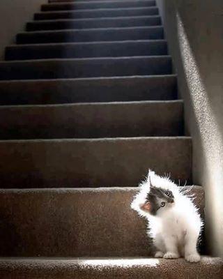 Cheeky kitty