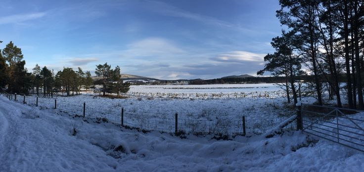 Grantown on Spey in the snow today #winter