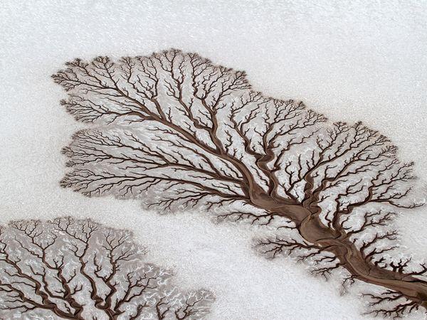 Dos ríos en el desierto de Baja California, México, que desde el aire parecen árboles sobre un paisaje nevado.