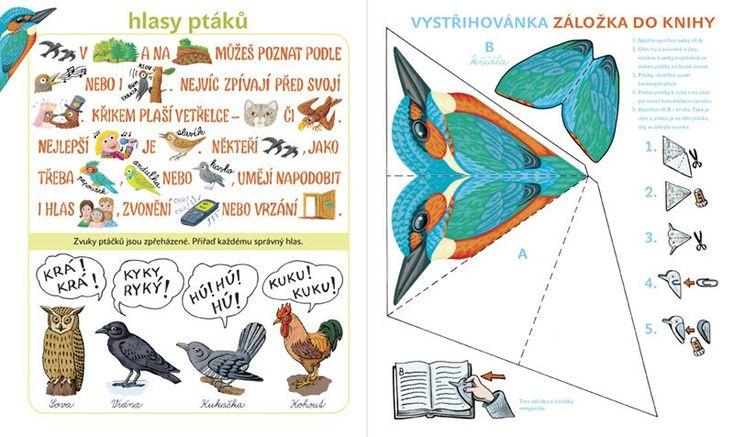 hlasy ptáků