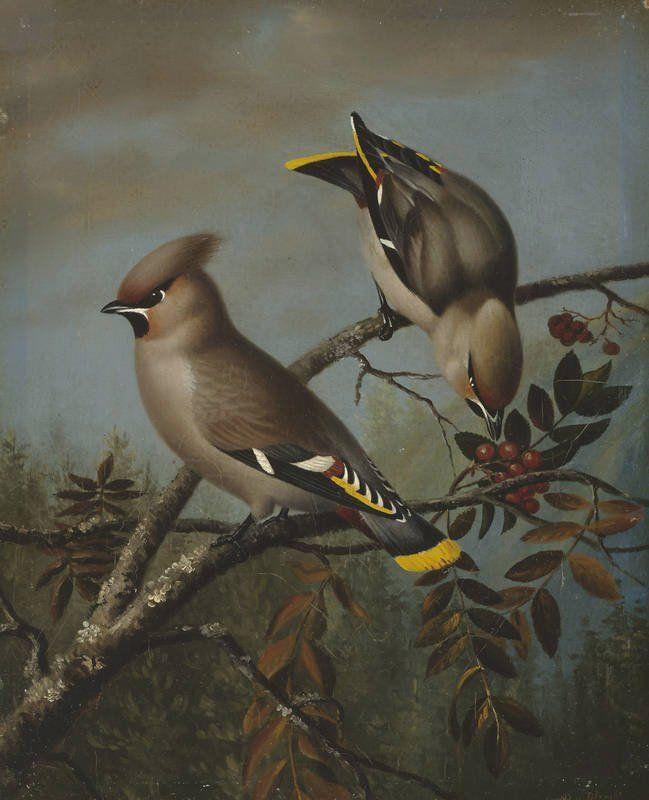 """""""Waxwings on Rowan"""" - """"Tilhiä pihlajassa"""", 1838-1839 (?) - oil on canvas - Magnus von Wright (1805-1868) -Ateneum- Wright maalasi 1838 ensimmäisen öljymaalauksensa, joka kuvasi tilhiä. Hän teki 1857 lyhyen opintomatkan romanttisen maisemamaalauksen keskuspaikkaan Düsseldorfiin. Wright maalasi lisäksi runsaasti kukka- ja hedelmäasetelmia."""