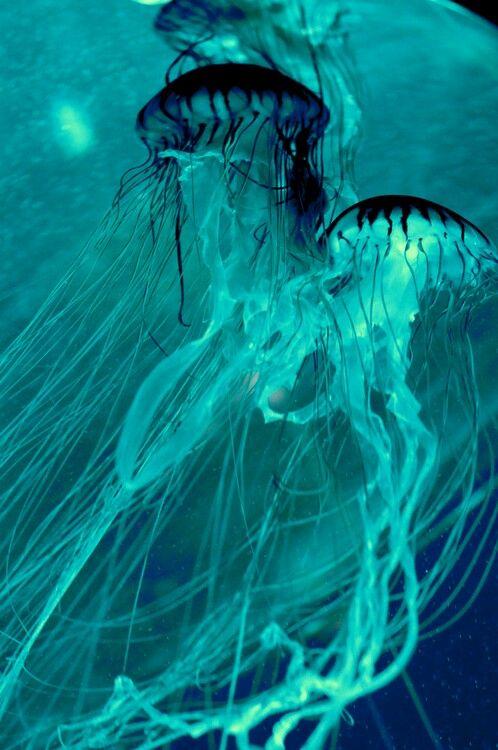 Teal gorgeous jellyfish