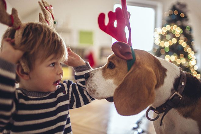 Blog | Carpet cleaning tips for the silly season. Whatever it may be; drink spills, dirt, lipstick, grass stains, grease and the humble mince tart, often these little rascals will most likely find their way onto your carpet this festive season. But there's no need to panic. Help is on the way.