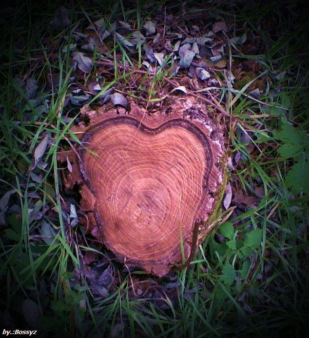 Lébény Wood Hungarian
