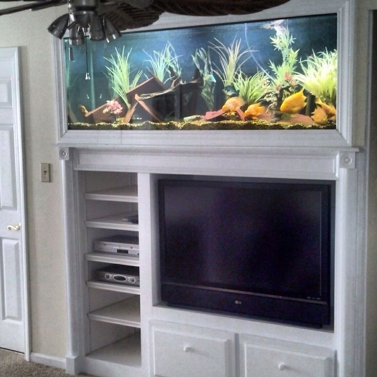 107 best images about plants terrariums and aquatic for Custom made fish tanks