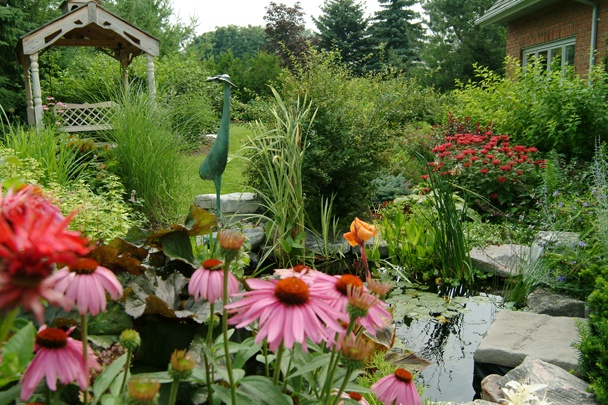 Sunken Retreat located in the wonderful town of King City. Using Echinacea, Bee Balm and Ornamental Grasses, this client always has something blooming in the garden for her enjoyment, as well as the birds and animals