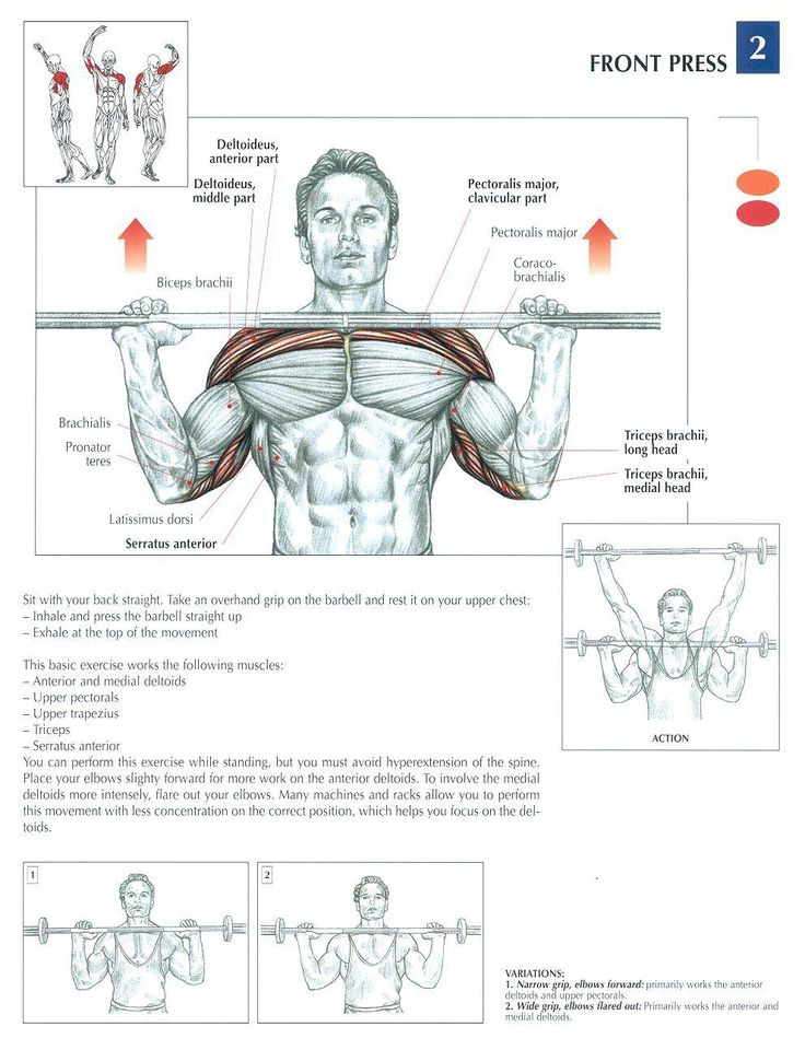 front press health fitness exercises diagrams body. Black Bedroom Furniture Sets. Home Design Ideas