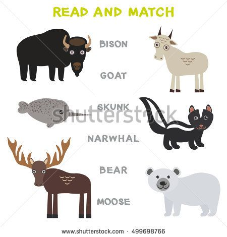 Kids words learning game worksheet read and match. Funny animals Bison Goat Skunk Narwhal Bear Moose Educational Game for Preschool Children Picture puzzle. Vector