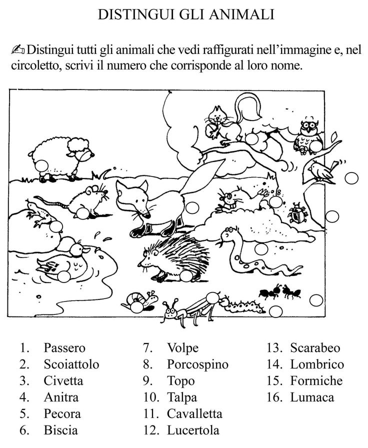 distingui gli animali classe seconda.jpg