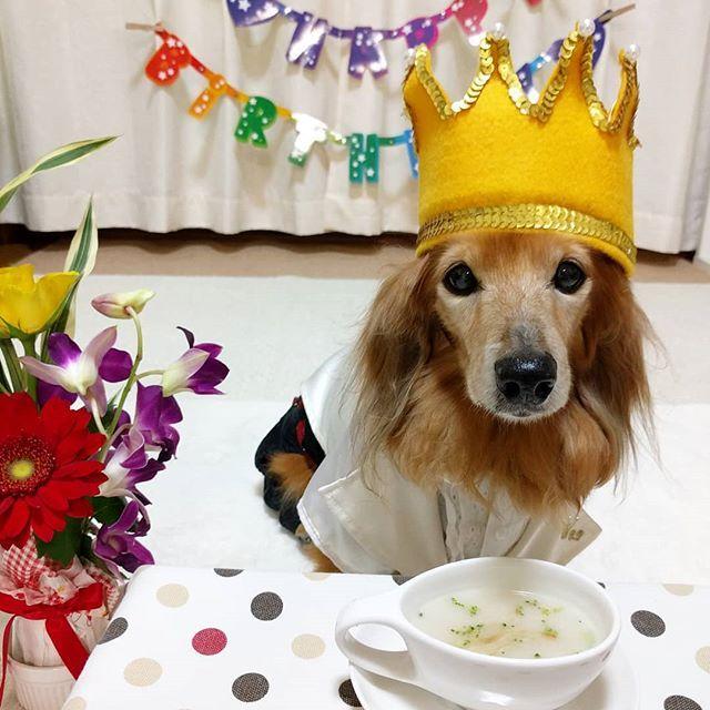 .🐾2018*2*19🐾 . 2/17は🐕大地14歳の🎂お誕生日だったので✌️😆✌️ 今年も親バカを【💪超絶MAX✌️😁】にして ❤お祝いしました🎉 . . 🐟お魚のムニエルの次は 🥔ジャガイモのスープが出て来たよ🎶🤗 . いつも飲む💧お水が 全〜部スープだったら良いのにね〜🎶 😁😁😁イヒヒッ💕 . . . . 🐾🐾🐾🐾🐾🐾🐾🐾🐾🐾🐾🐾🐾🐾🐾 . #大地#大好き#だいすき #いつも一緒#ずっと一緒 #大地なしでは生きて行けませんw #いぬ#イヌ#犬#わんこ . #ワンコ#愛犬#いぬばか部 #犬バカ部#いぬら部#いぬすたぐらむ #犬のいる暮らし#犬の生活が第一 #横浜#yokohama . #神奈川#pecoいぬ部 #誕生日#おめでとう #ミニチュアダックスフンド#ミニチュアダックスフント #ダックスフンド#ダックスフント #ミニチュアダックス#ダックス