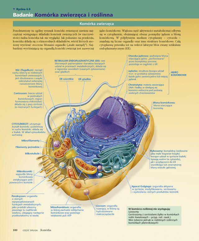 BIOLOGIA Campbella - podręcznik