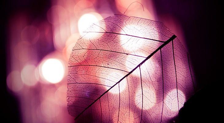 Leaf macro photo (Bokeh)