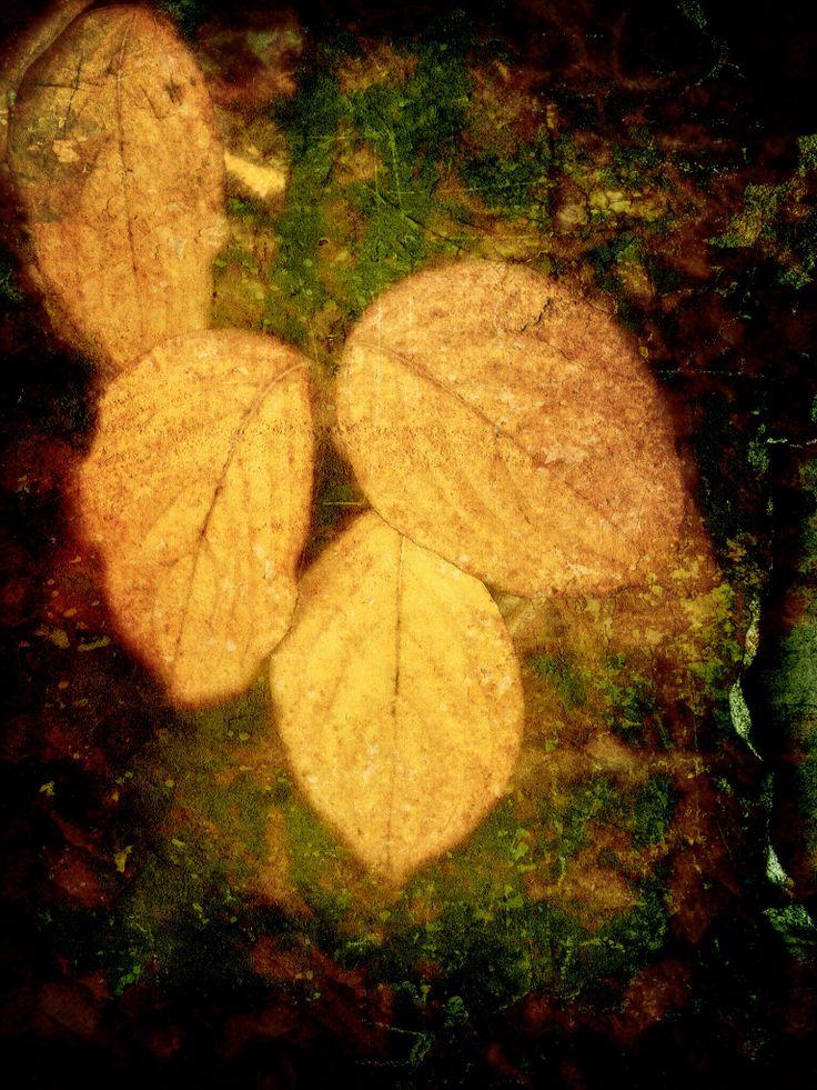 Quadrant of Autumnal leaves