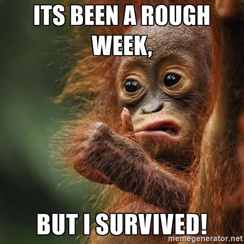 Orangutan Survive - Its been a rough week, But i survived!