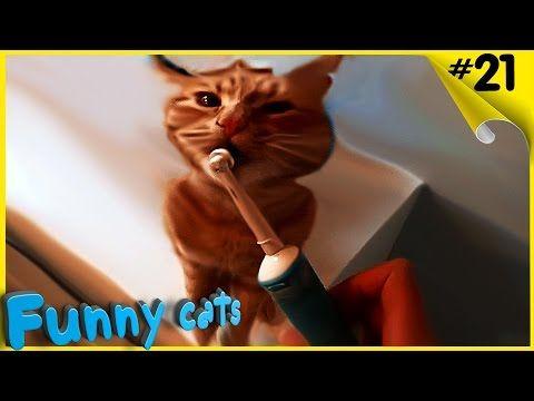 Смешное видео с кошками. Смешные кошки, коты | Funny cats