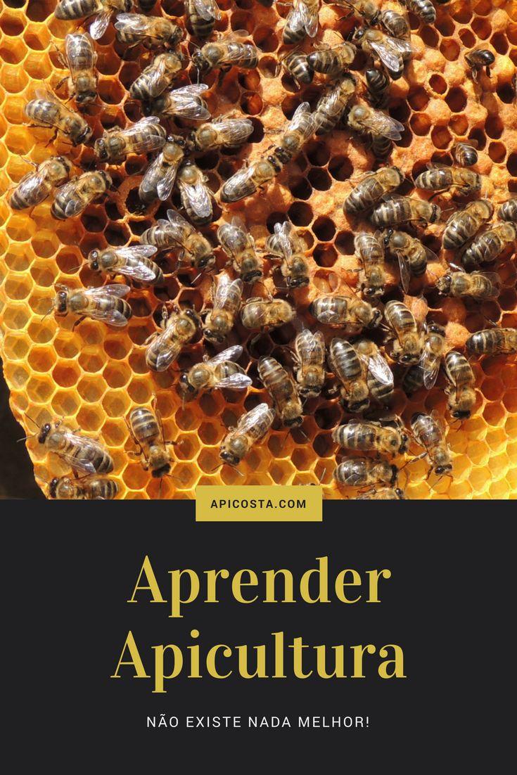 Quer aprender apicultura, quer ter um negócio apicola venha dai!