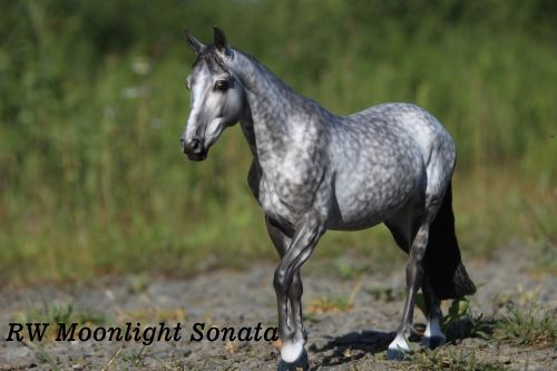 Brigitte Eberl - Page 52 - Resins - Model Horse Forum of MPV