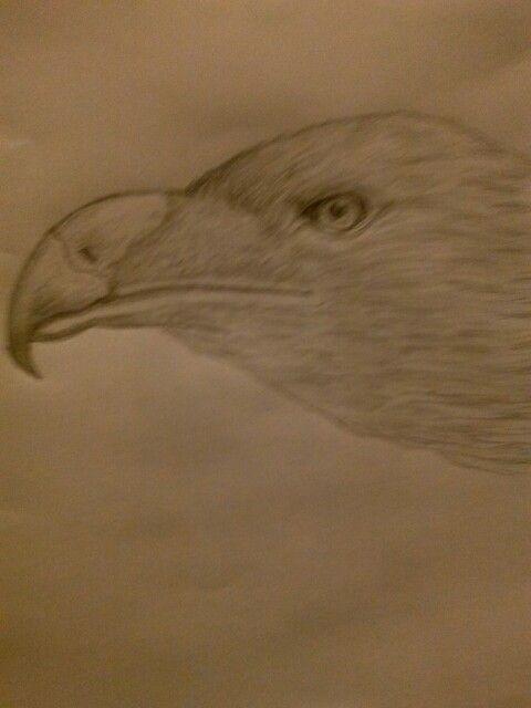 Aguila real dibujo a lapiz