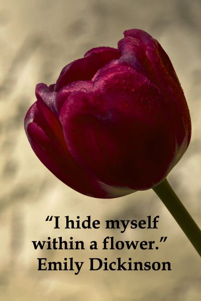 """""""I hide myself within a flower.""""  Emily Dickinson -- Inspire your inner aesthetic with quotes at http://www.examiner.com/article/artistic-wanderlust-journey-through-words-and-images"""