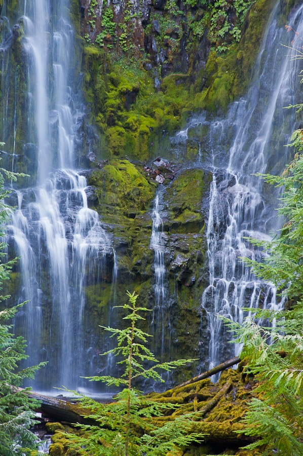 Lower Proxy Falls, Oregon: Photo