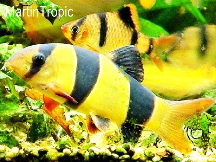 Las 25 mejores ideas sobre peces ex ticos en pinterest - Fotos de peces tropicales ...