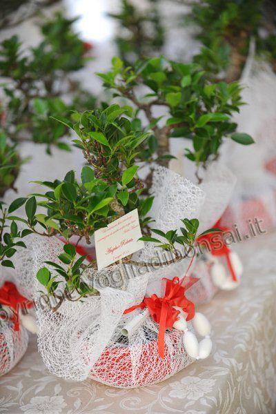 Bomboniere bonsai, per coltivare con amore il ricordo delle vostre nozze The Wedding Italia