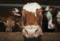 Le ministère américain de l'Agriculture a annoncé mardi avoir détecté un cas de maladie de la vache folle en Californie (ouest des Etats-Unis), tout en tentant de rassurer les consommateurs quant à la santé du bétail aux Etats-Unis. Le ministère de l'Agriculture a confirmé le quatrième cas dans le pays d'encéphalopathie spongiforme bovine (ESB) sur [...]
