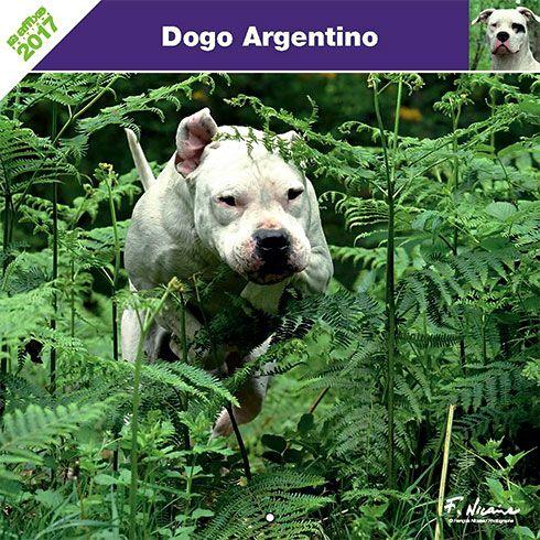 Calendrier chien 2017 - Race Dogue argentin - Affixe Edition