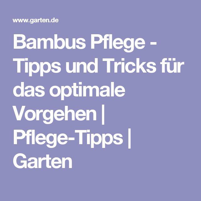 25+ Best Ideas About Bambus Pflanzen On Pinterest | Bambus ... Bambus Im Garten Tipps