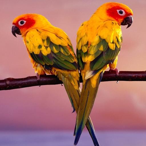 New Birds Wallpapers HD | Best Wallpapers HD 2