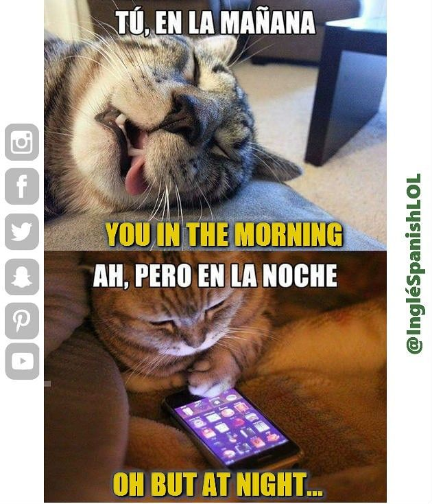 Learn Spanish Aprende Ingles Funny Memes Funny Spanish Memes Animal Memes