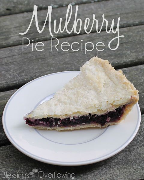 We have a mulberry tree growing in our backyard. I picked the berries and made a delicious mulberry pie. The recipe is really quite easy.