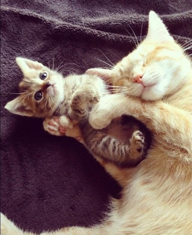Orphan Kitten Finds a New Mom Who is Also a Rescue Cat - LoveMeow